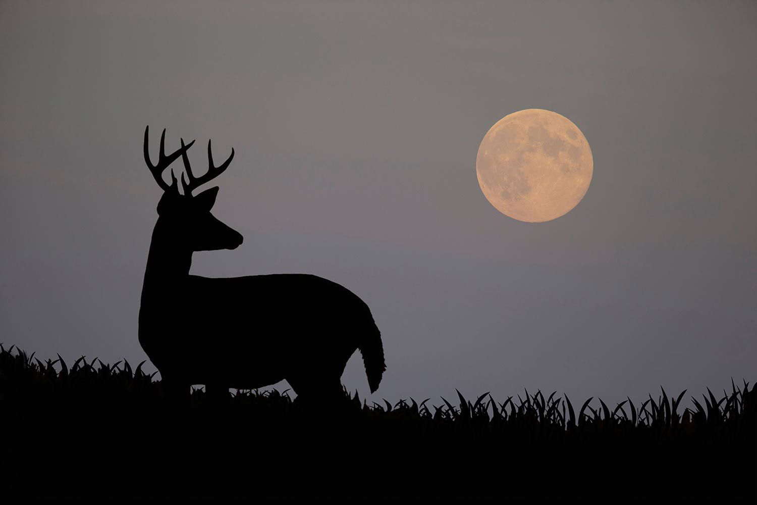 How Moon Phases Will Impact Deer Hunting During The Rut This