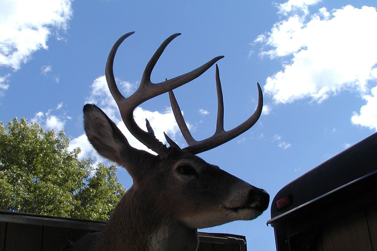 Illinois Bowhunters Stay Ahead Of Harvest Pace In 2018-19