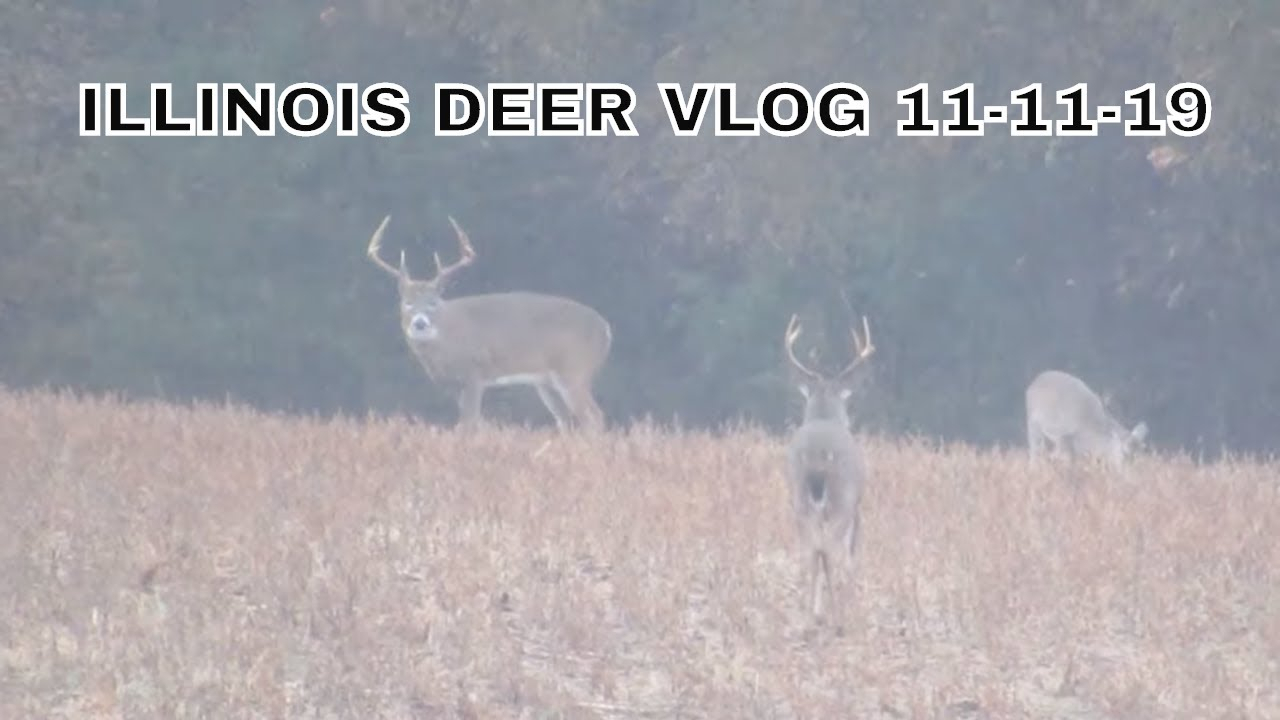 Illinois Deer Hunting 2019 (11-11-19) Vlog Big Bucks In The Soybeans! (But  Not On My Property!)