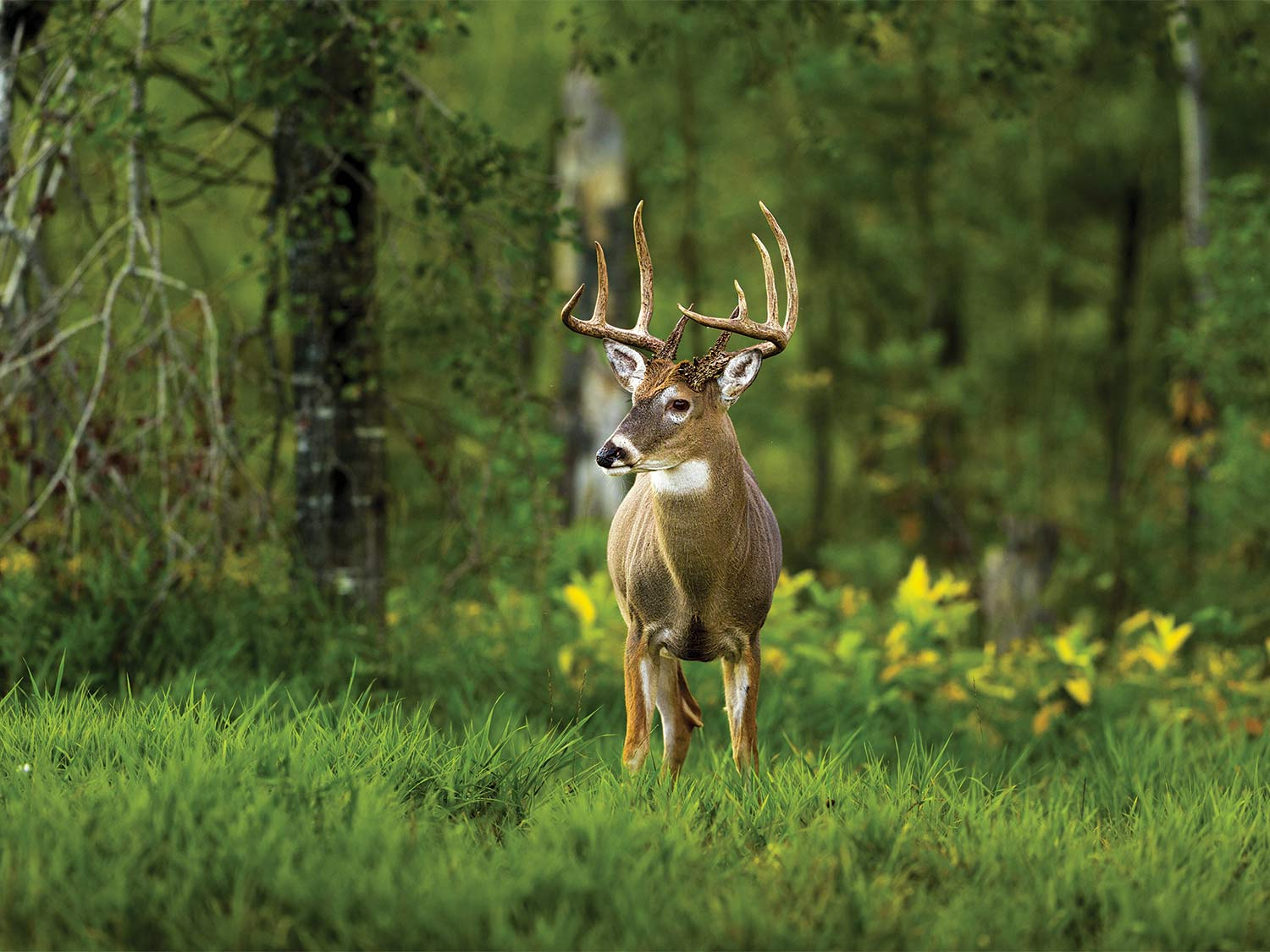 It's Time To Cut The B.s. In Deer Hunting | Outdoor Life