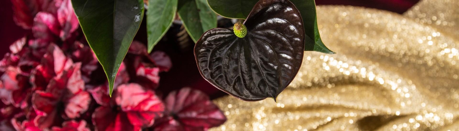 Noviflora | Special Days Calendar 2020 | 11 | 2019 | Detail