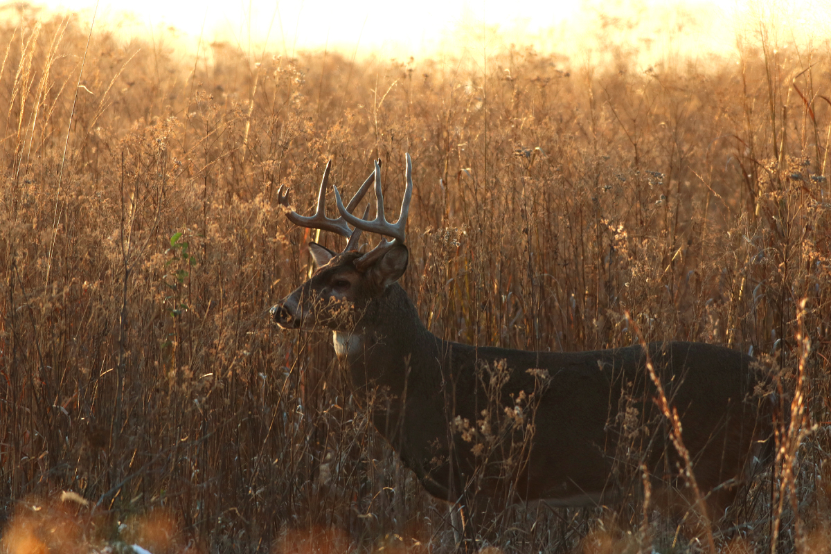 Outdoor Illinois Wildlife Journal
