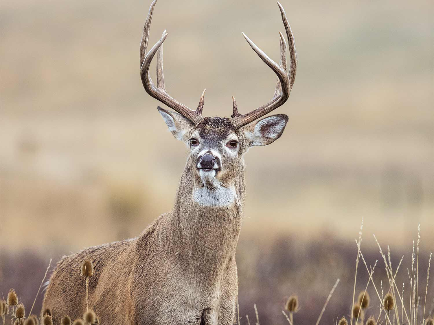 The 25 Best Deer Hunting Tips For The Whitetail Rut | Field