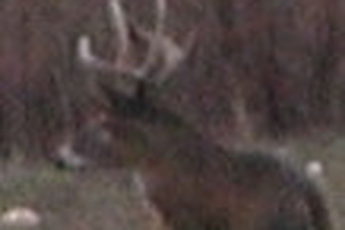Rut, Even More Signs In Illinois: Archery Harvest Stays Up