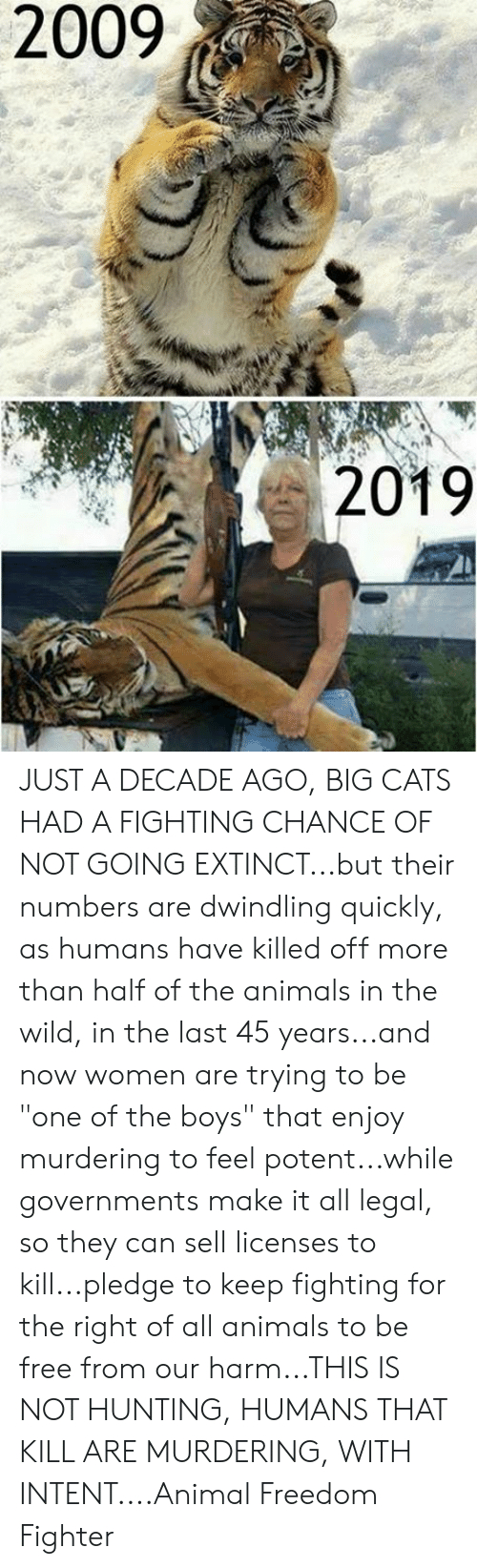 2009 2019 Just A Decade Ago Big Cats Had A Fighting Chance