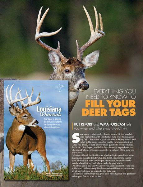 2016-2017 Rut Report / Wma / Whitetails | Deer Tags