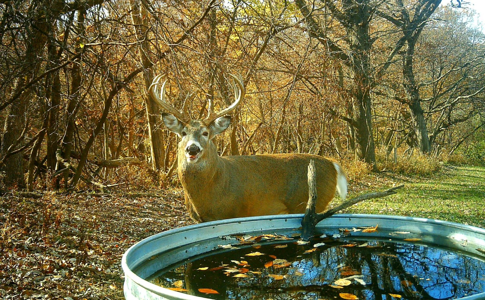2016 Rut Forecast Weekend Timing | Whitetail Habitat Solutions