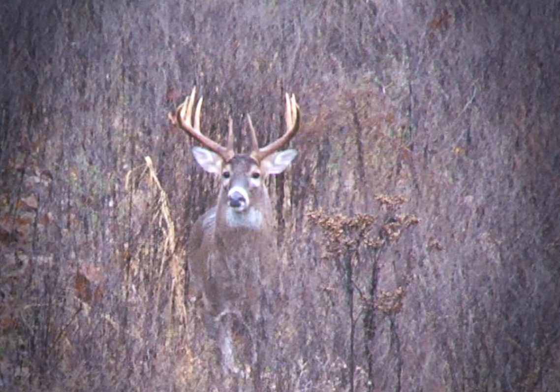 2016 Rut Predictions – Could It Be Another Late Whitetail