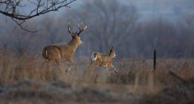 2017 Whitetail Rut Forecast And Predictions