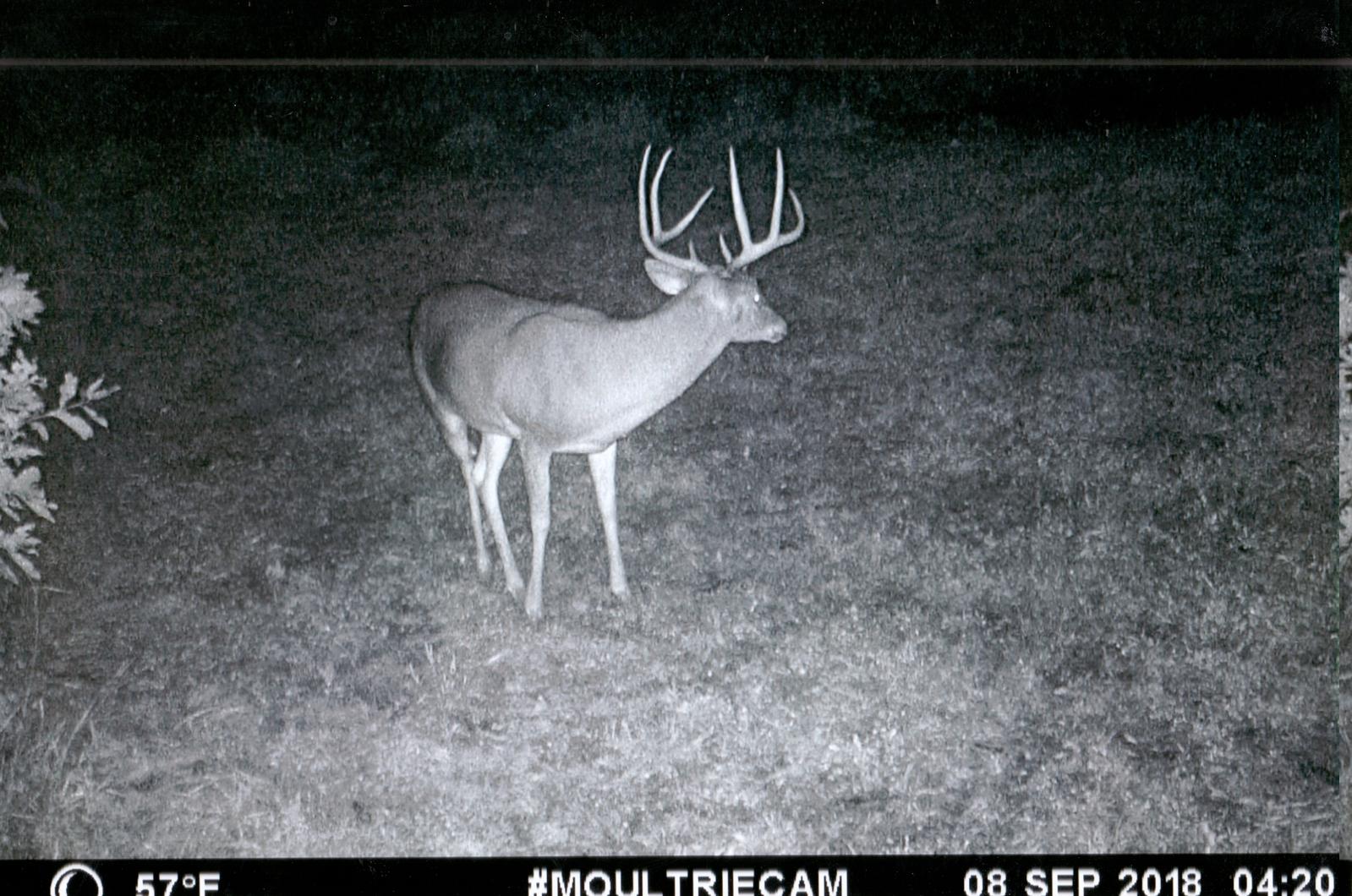 2018-19 Trail Cam Gallery - Northeast Missouri Hunting Company