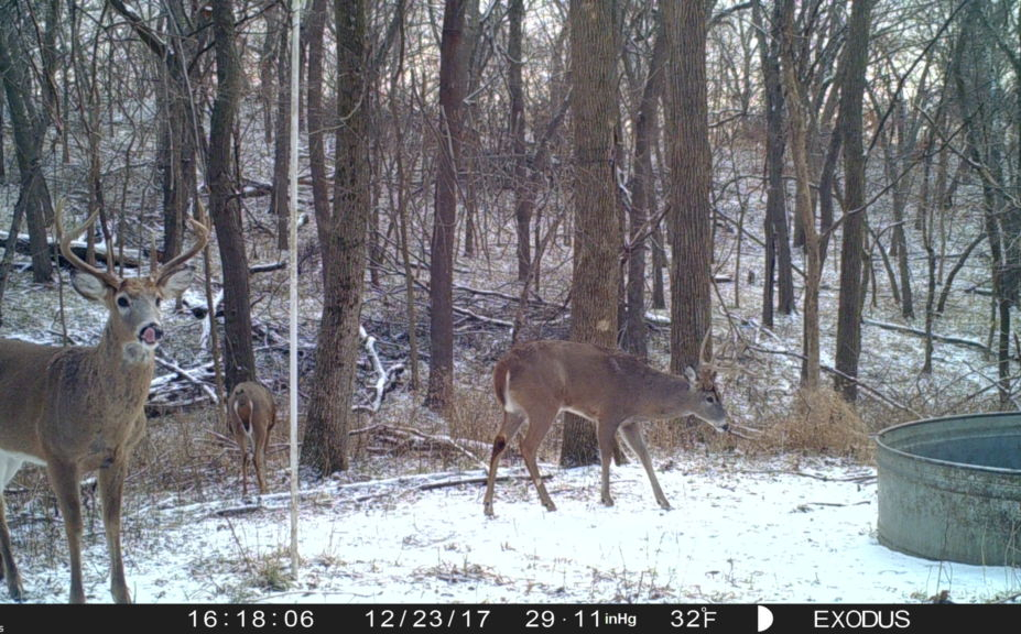 2018 Whitetail Rut Forecast And Hunting Guide   Whitetail