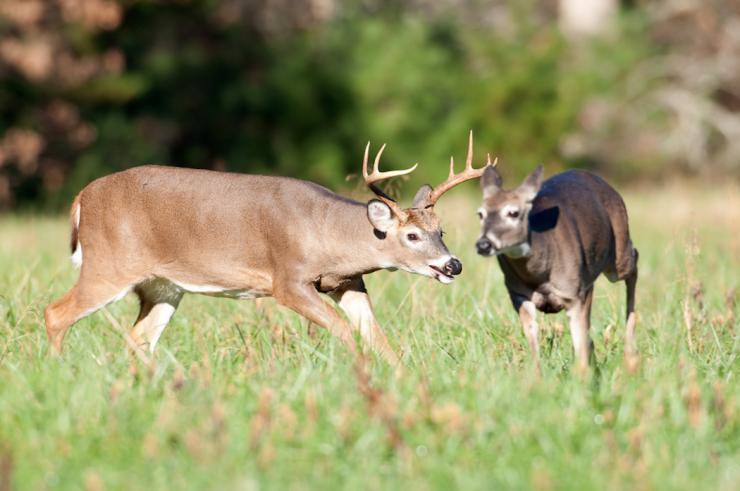 2019 Rut Prediction - Hidden Hollow Whitetail Ranch