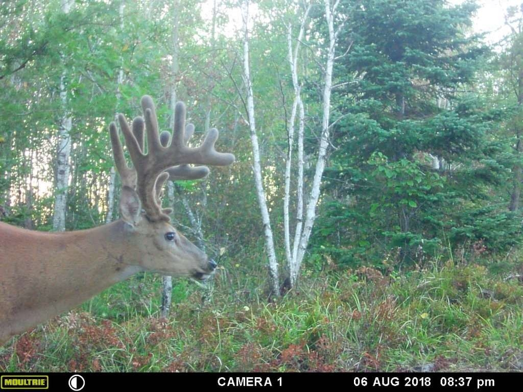2020 Deer Rut Prediction – Template Calendar Design