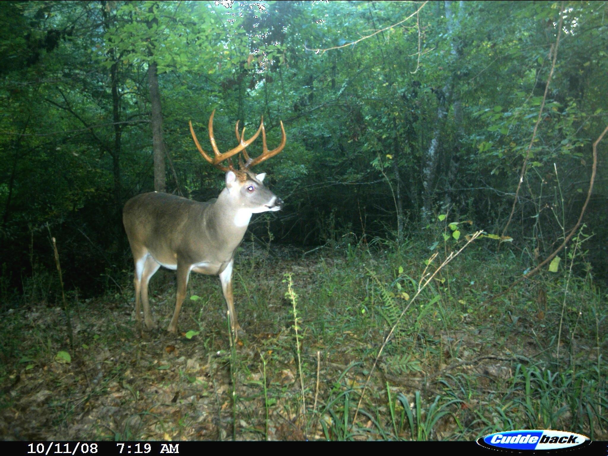 2020 Deer Rut Prediction – Template Calendar Design