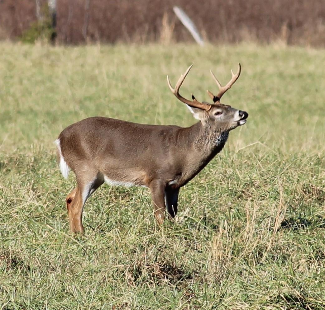 2020 Hunting Season Rut Georgia – Template Calendar Design
