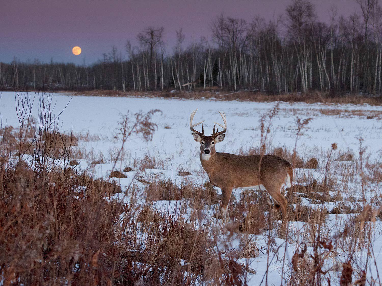 2020 Illinois Deer Rut Activity | Calendar Template