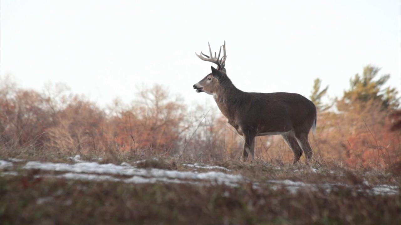 2020 Illinois Deer Rut | Calendar Template Printable