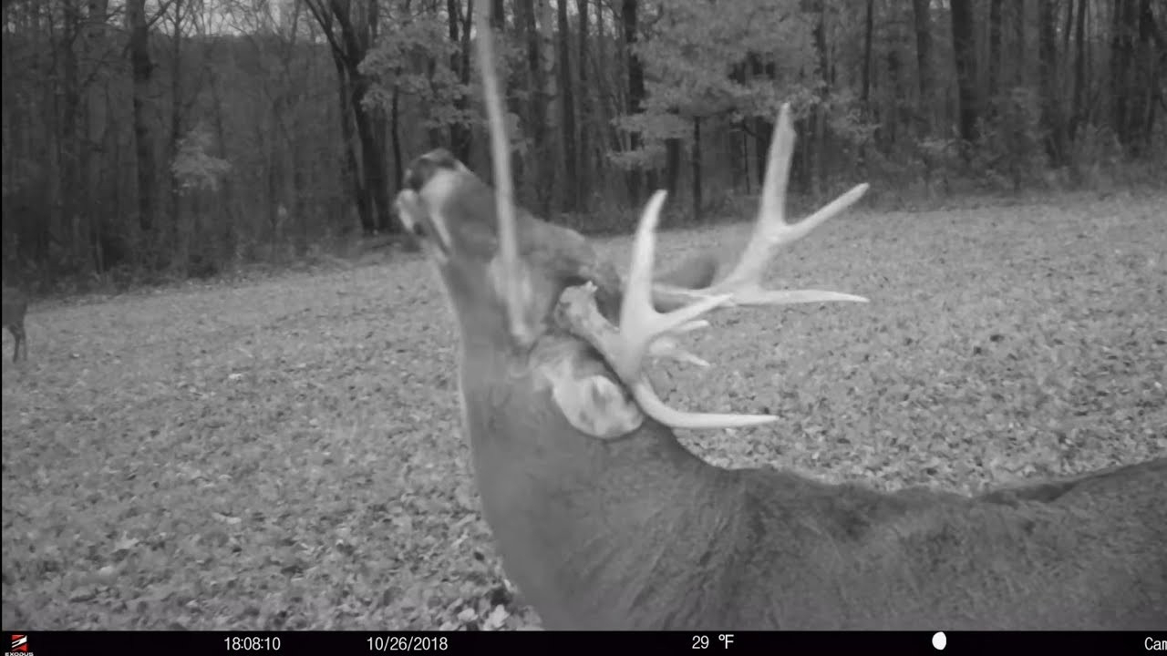 2020 Rut Forecast Whitetail Deer – Template Calendar Design