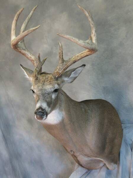 265 Best Monster Bucks Images On Pinterest | Hunting, Deer
