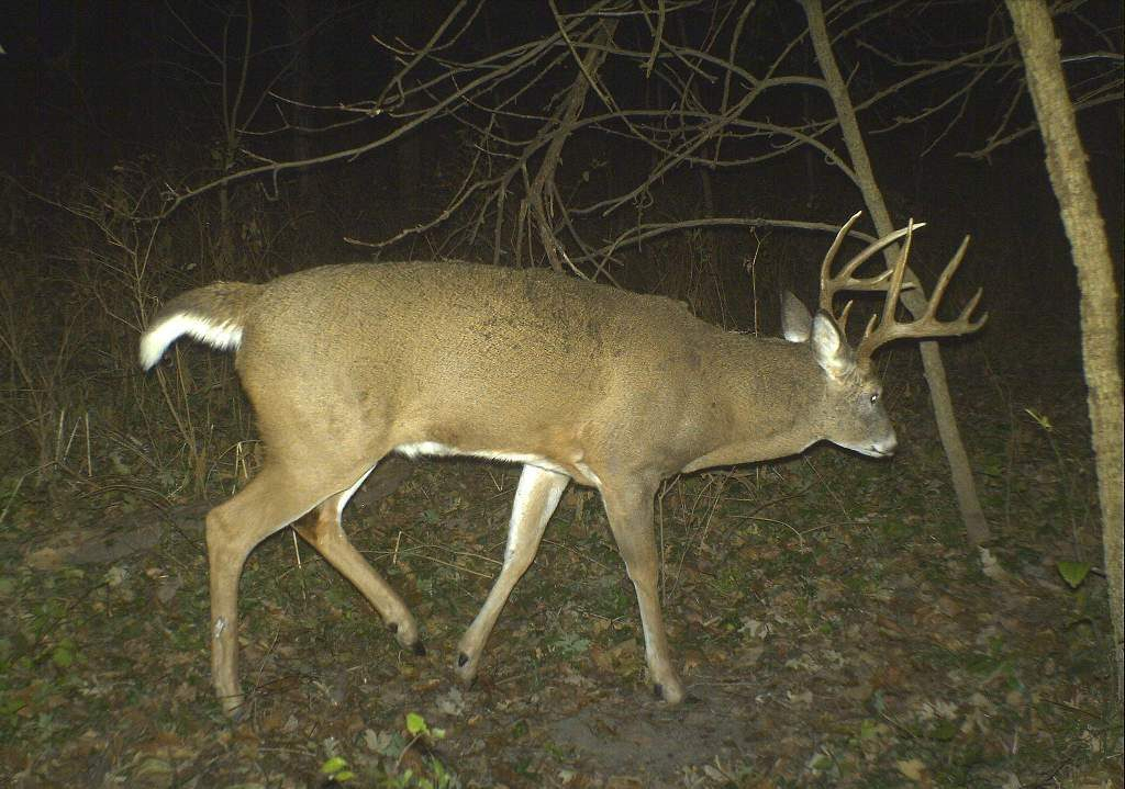 5 Facts About Whitetail Buck Excursions | Bucks Bulls Bears