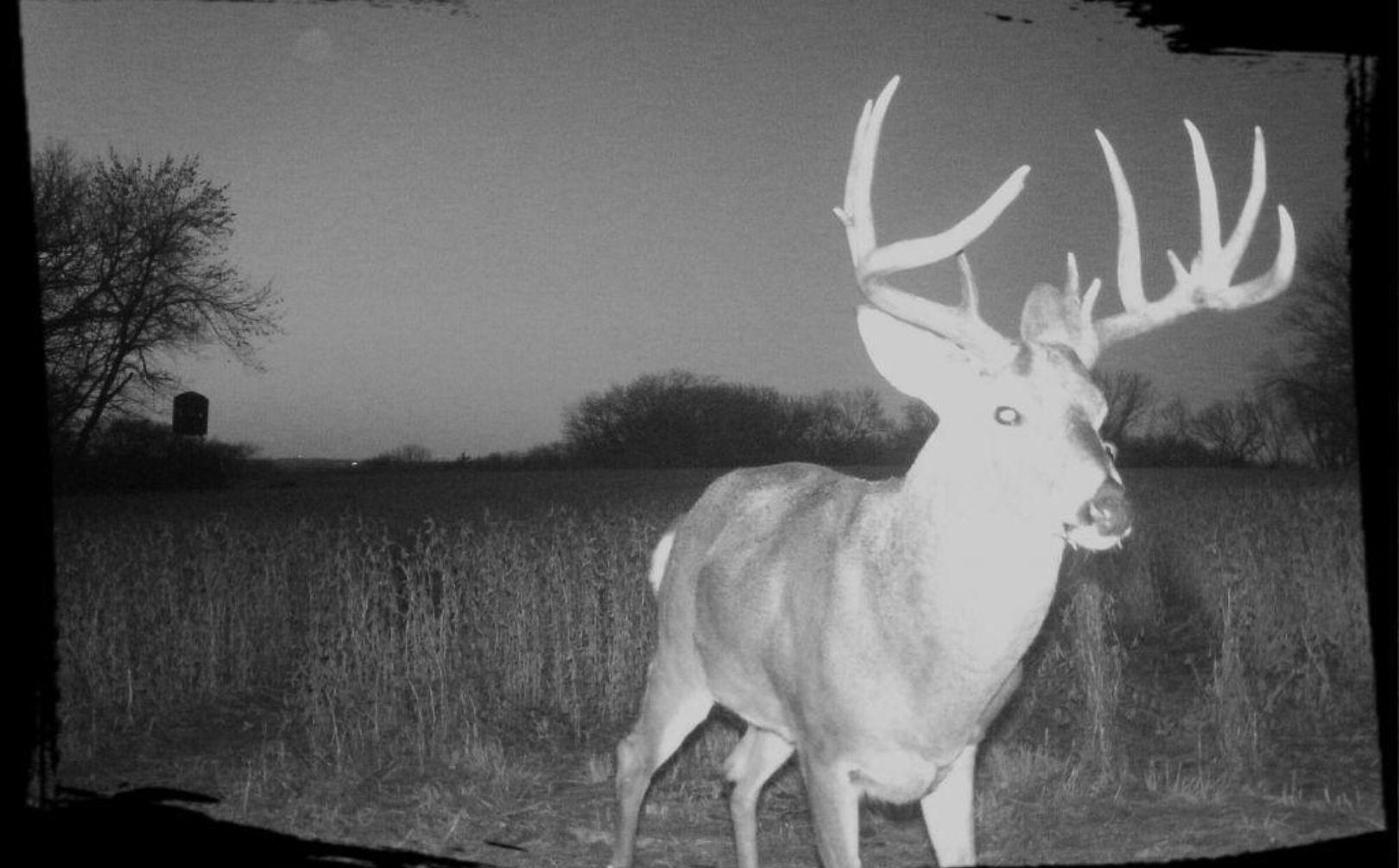 5 November Deer Rut Priorities For Small Parcels