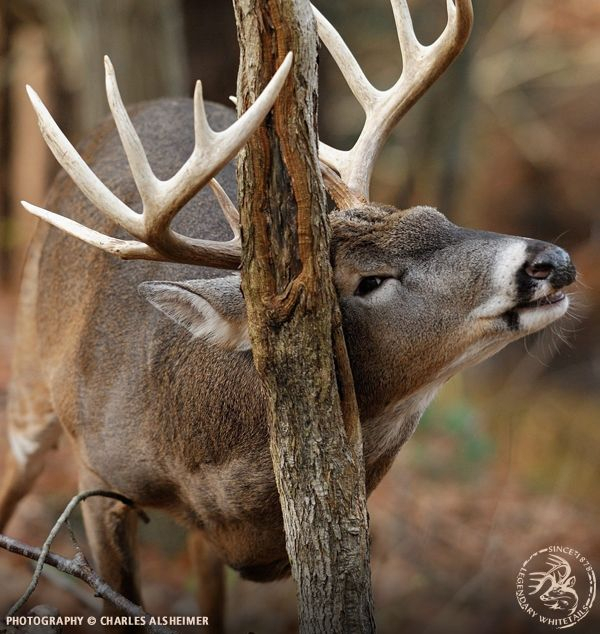 7 Tips For Photographing Whitetails | Oh Deer! | Hunting