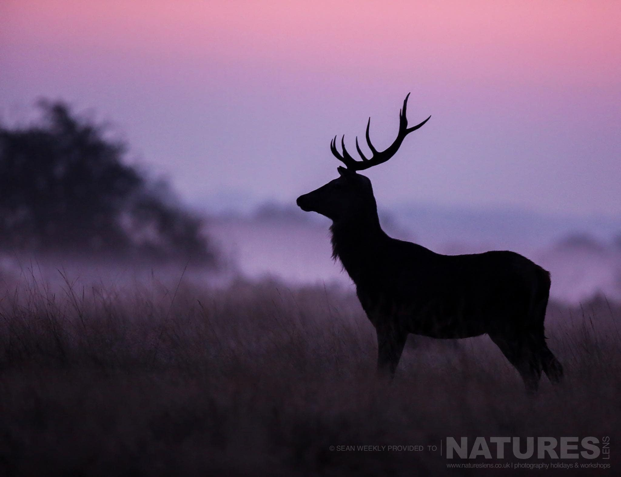 Announcing Our Red Deer In Rut Photography Workshop