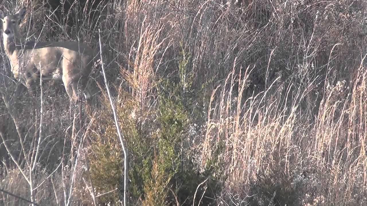 Bow Hunting Indiana - Youtube