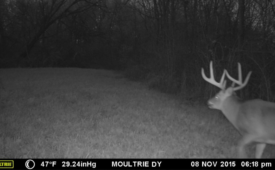 Critical Primary Whitetail Rut Forecast Alert | Whitetail