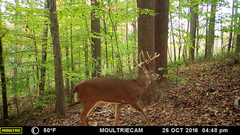 Crossbow Whitetail Hunt In Ohio