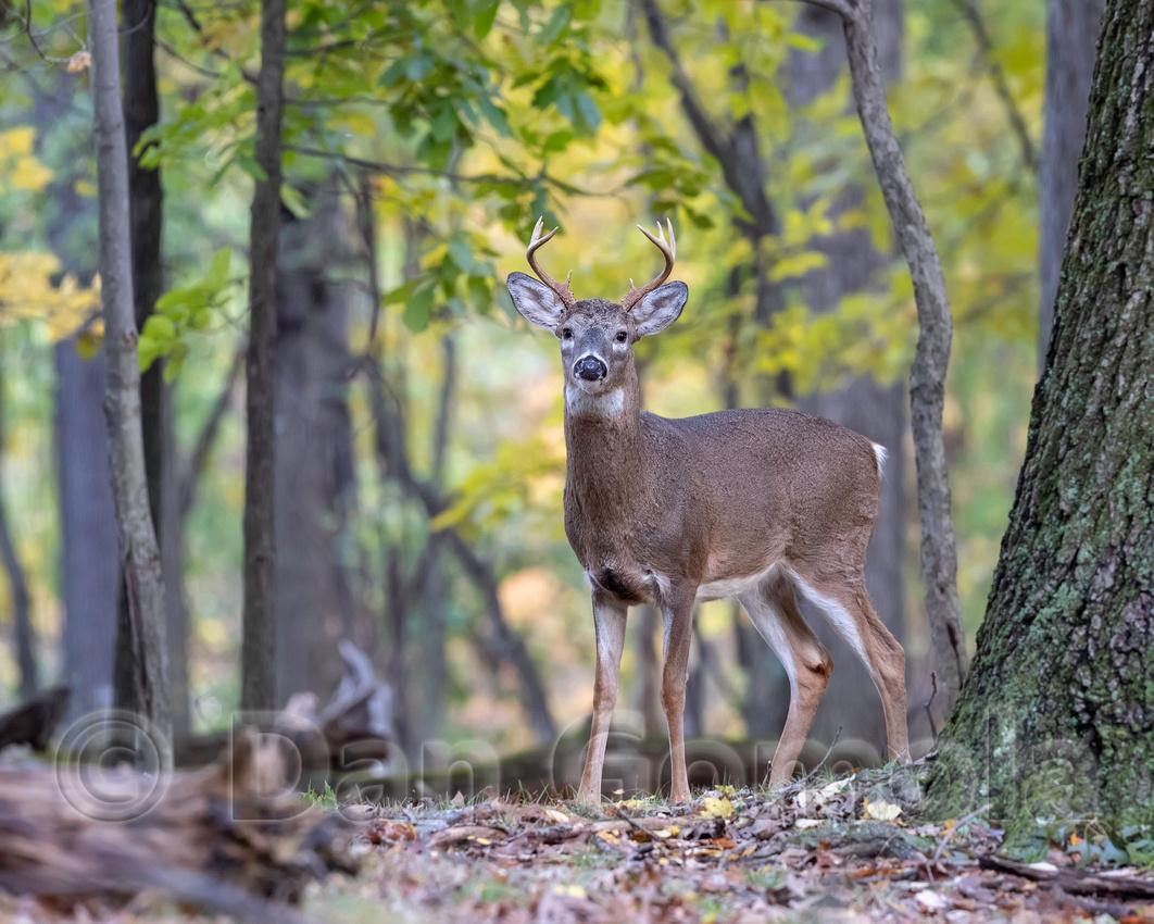 Dan Gomola Wildlife Photography: Blog