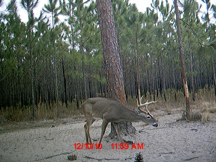 Day Hunt Game Camera - Roberts Ranch