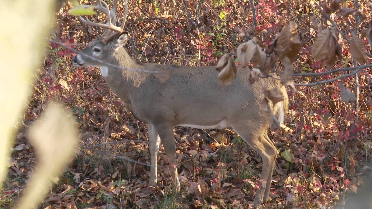 Deer Hunting The Rut In Missouri - Youtube