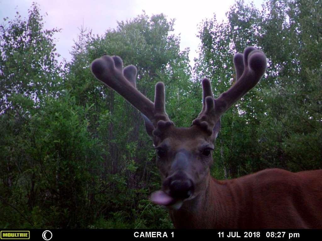 Deer Rut 2020 – Template Calendar Design