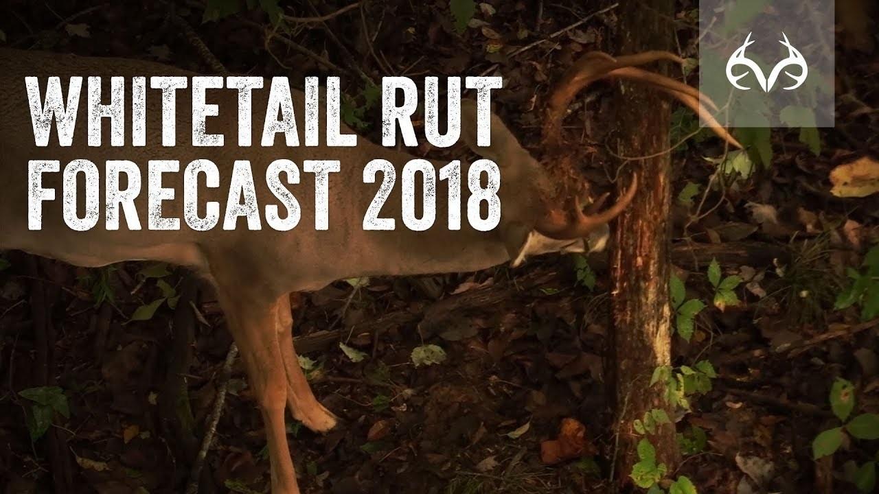 Deer Rut Forecast 2020 – Template Calendar Design