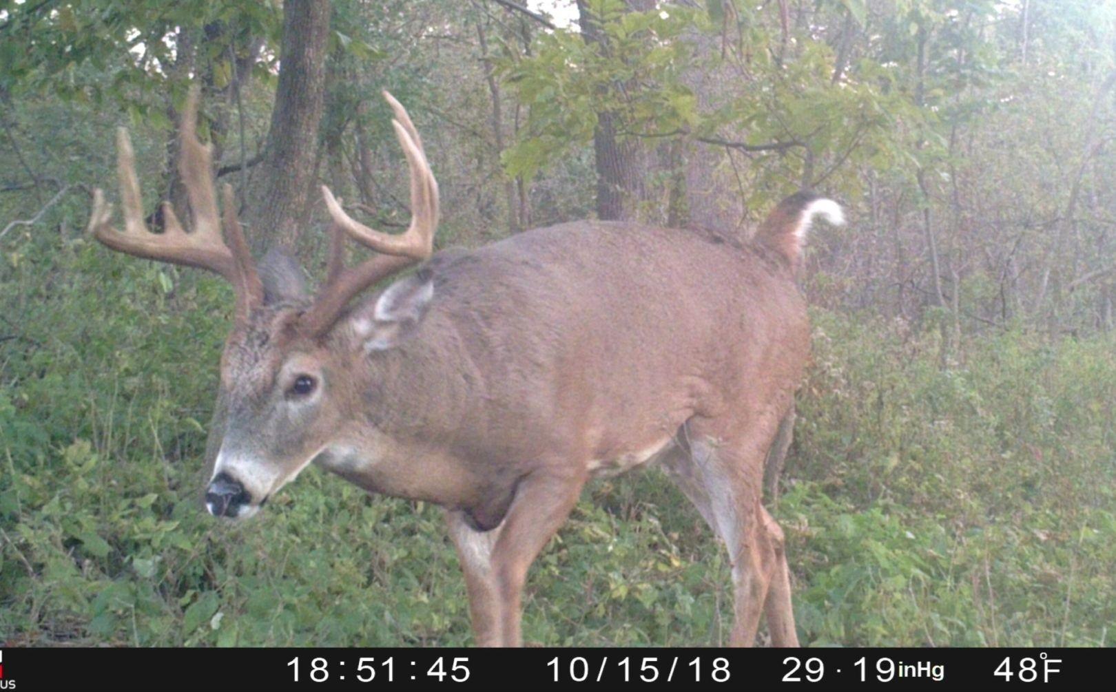 Deer Rut Whitetail 2020 – Template Calendar Design