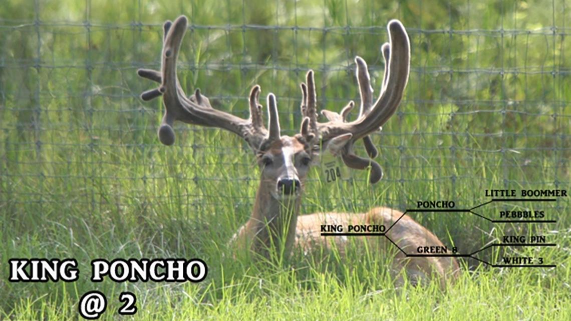 Florida Deer Breeding - Roberts Ranch Whitetails