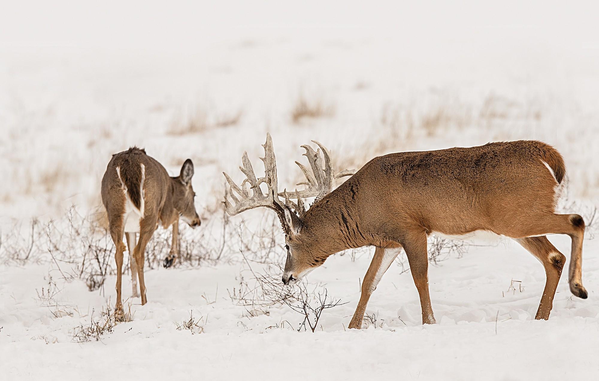 Ga Deer Rut Dates 20019 – Template Calendar Design