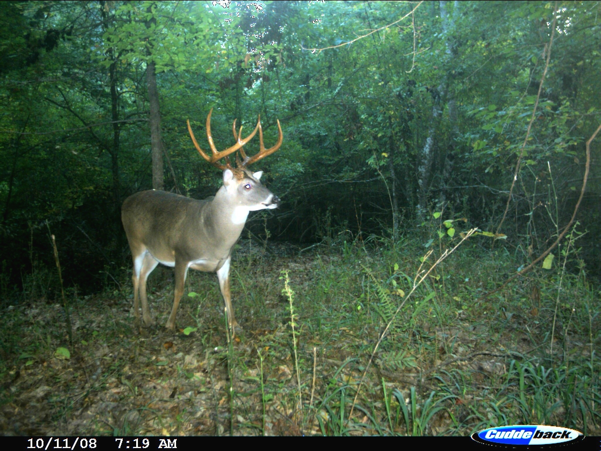 Georgia Deer Forecast – Template Calendar Design