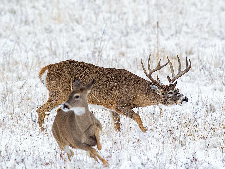 Get 2020 Il Deer Rut Season | Calendar Printables Free Blank