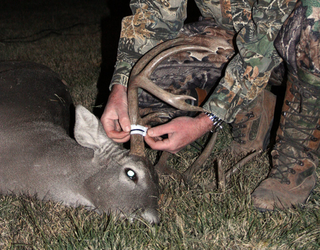 How And Why To Deer Hunt All Day During Texas Rut