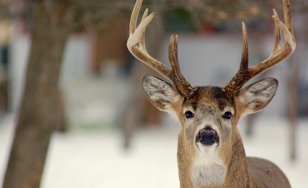 Hunting Deer Before, During & After The Rut • Outdoor Canada