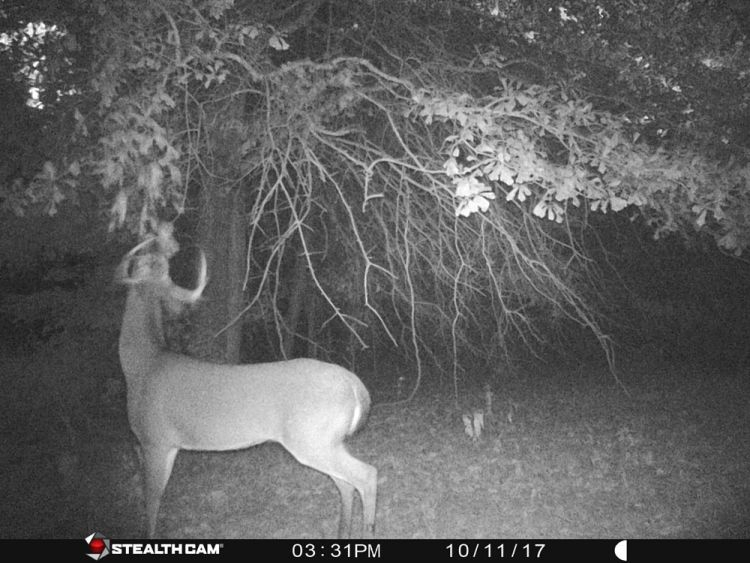 Hunting The Rut In 2018