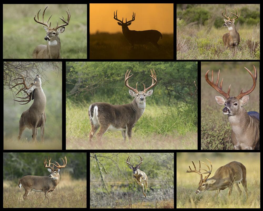 Illinois Deer Rut 2020 | Calendar Template Printable