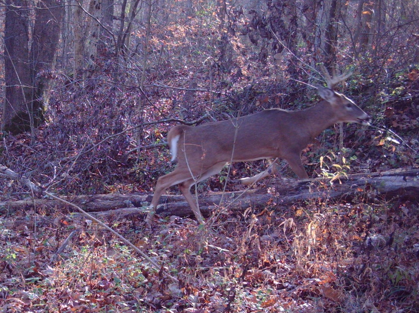 Indiana Woods And Waters: Strategies For Hunting The