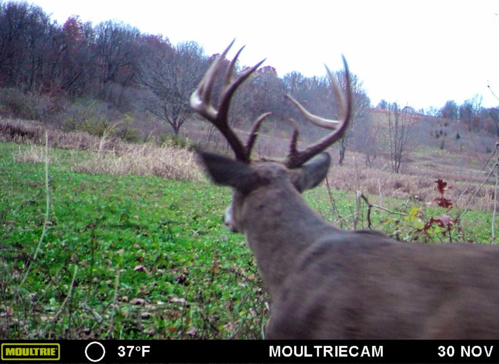 Late November Deer Hunting Tactics In Illinois | Heartland