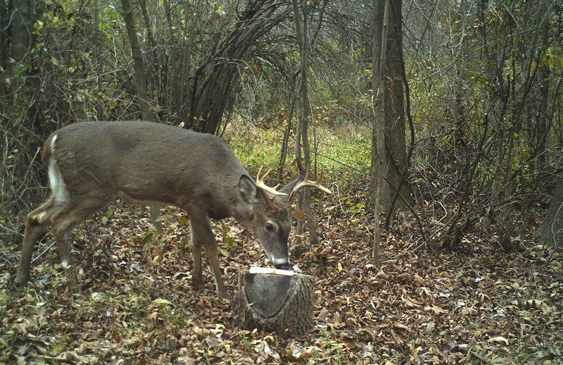 Locals Donate Deer Meat To Feed The Needy | Local News