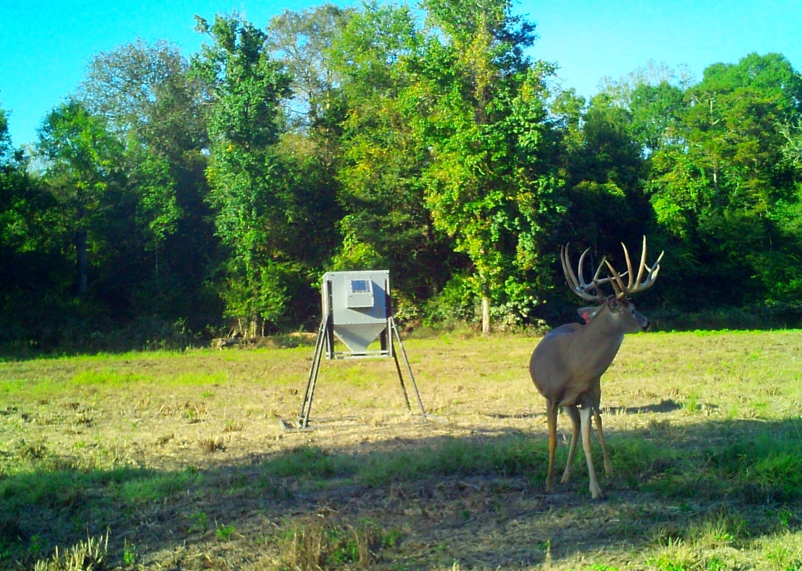 Louisiana Guided Deer Hunting | Whitetail Deer Hunts