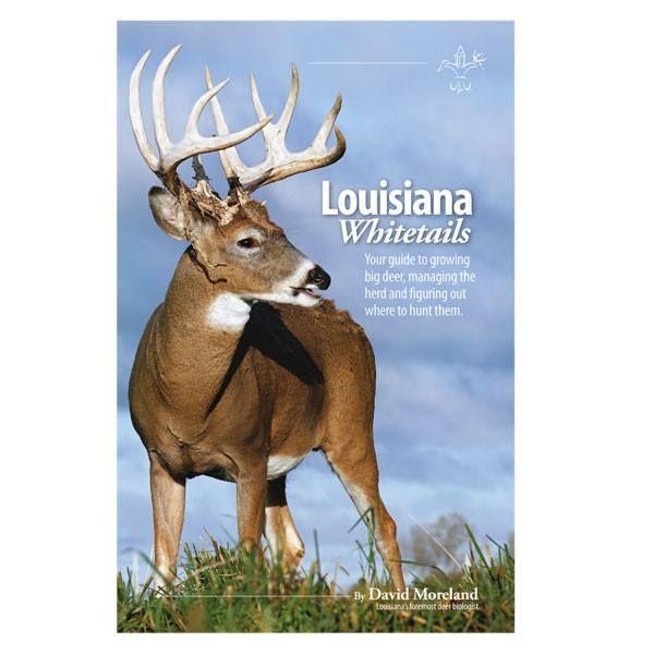 Louisiana Whitetails   Big Deer, White Tail, Louisiana