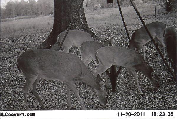 Louisiana's 2012-13 Deer Rut Calendar